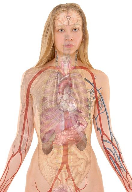 Anatomy 254120 640