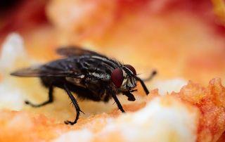 Bug 1851155 640