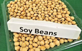 Soy Beans 968986 640